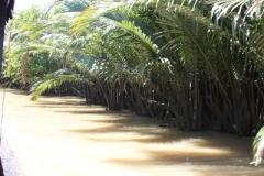 Mekong Delta 2011