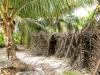 sambava-plantage-10