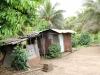sambava-plantage-11